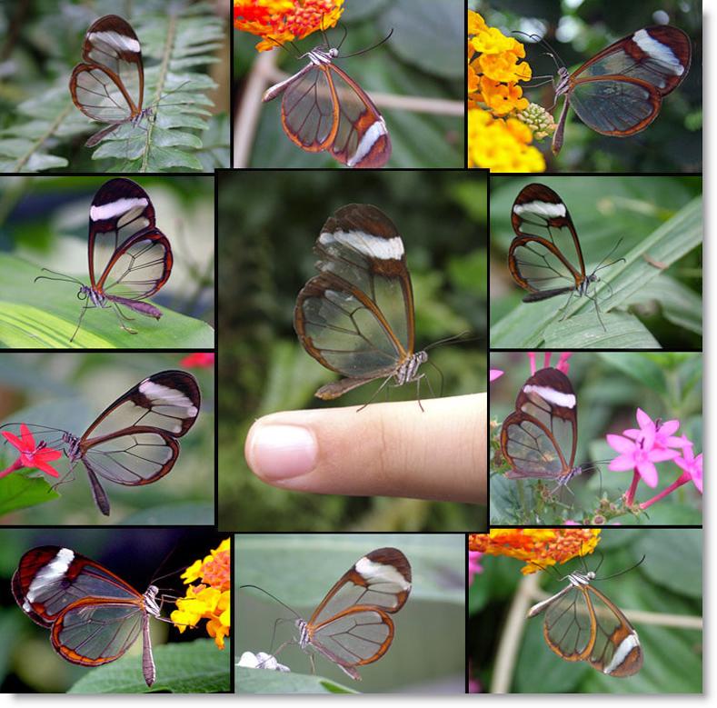 mariposa-alas-de-cristal.png