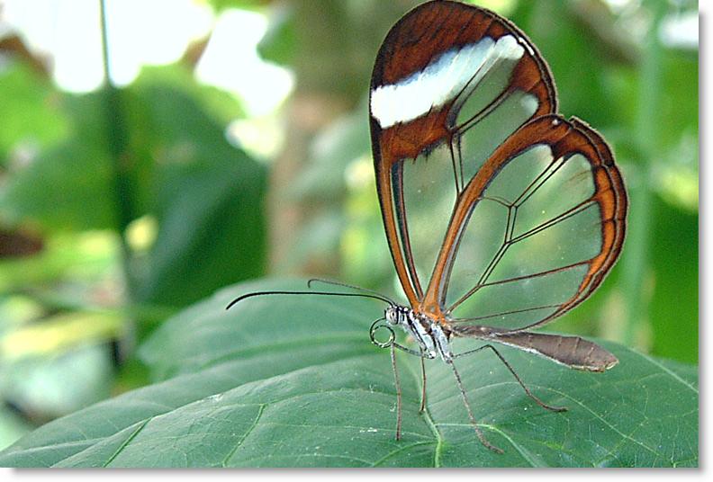 Adivina Mariposa01