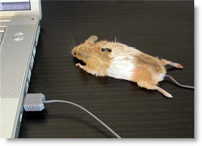 mouse-mouse2