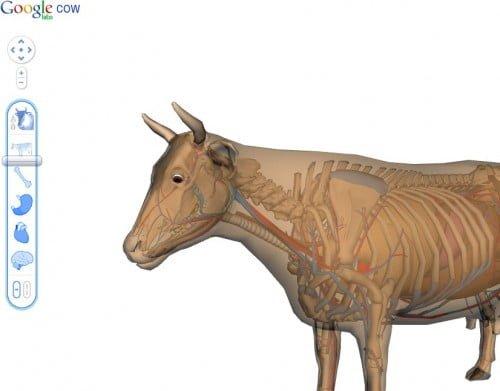 google-cow-500x391